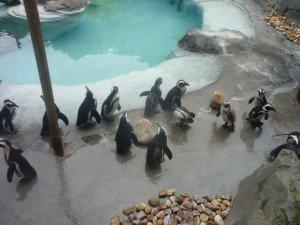 Le zoo de Madrid (1) dans Mes villes zoo-de-madrid-001-300x225