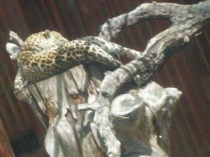 Le zoo de Madrid (2) dans Mes villes zoo-de-madrid-2012-001-300x225