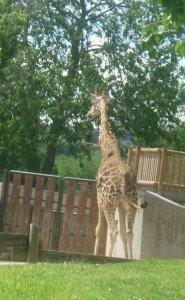 zoo-de-madrid-2012-002-185x300 dans Mes villes